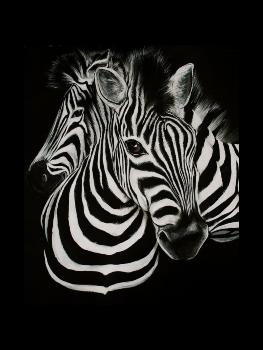 zebres - accompagnement